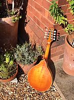 Click image for larger version.  Name:Mandolin Feeling Back.jpg Views:47 Size:176.8 KB ID:190798