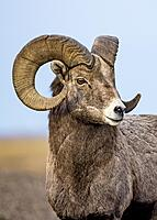 Click image for larger version.  Name:big horn.jpg Views:12 Size:340.1 KB ID:189590