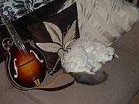 Click image for larger version.  Name:'Cat, Mandolin - Mandolin ,cat'.jpg Views:104 Size:126.5 KB ID:82622