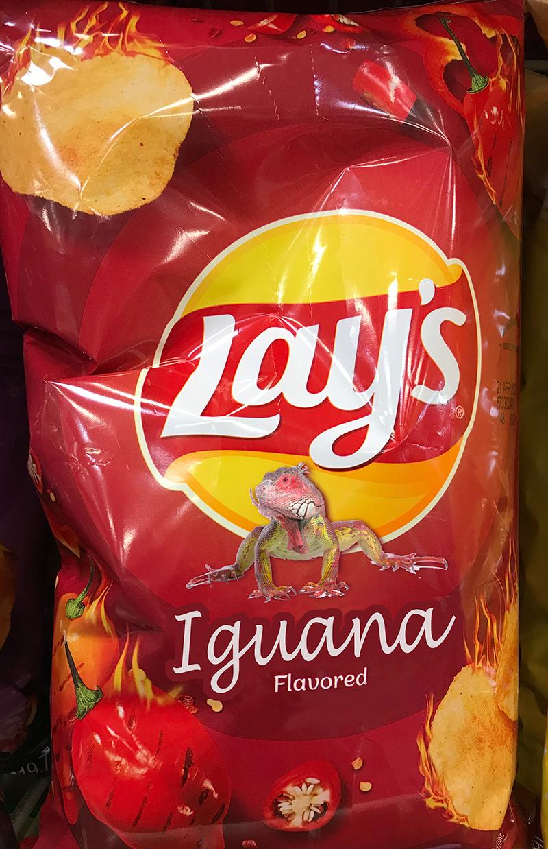 Name:  iguana.jpg Views: 465 Size:  911.3 KB