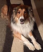 Click image for larger version.  Name:Campbell Shop Dog.jpg Views:24 Size:566.2 KB ID:187308