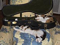 Click image for larger version.  Name:Mandolin Cats small.jpg Views:32 Size:379.9 KB ID:184723