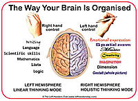 Click image for larger version.  Name:brainorg300.jpg Views:165 Size:22.7 KB ID:139267
