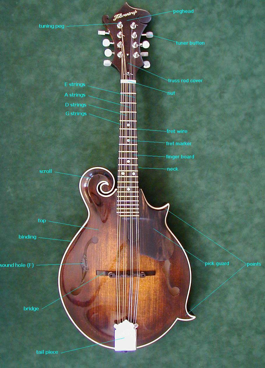 Diagram Mandolin Wiring Libraries Diagrams Glossary Bridgesee Also This
